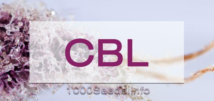 CBL Cannabinoid