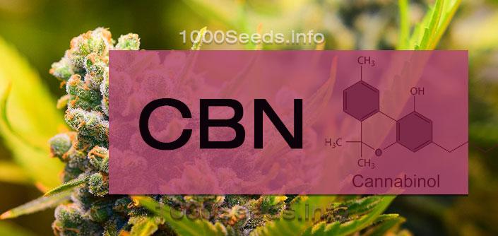 CBN-Cannabinoid