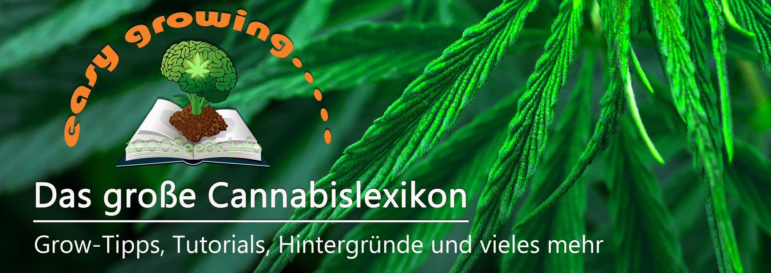 Cannabis-Lexikon