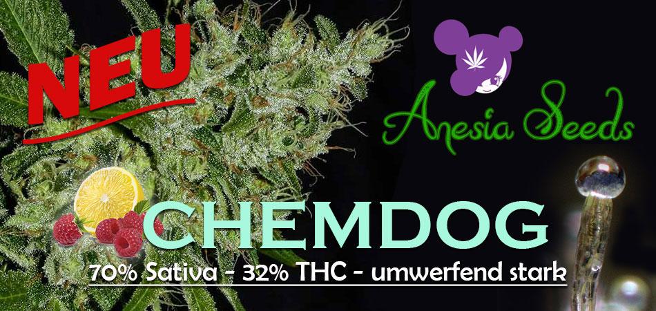 chemdoganesia
