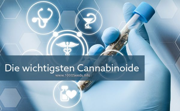 die-Cannabinoide im Cannabis