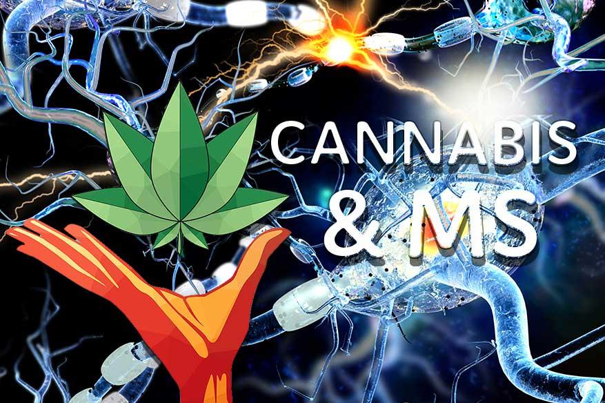 Cannabis-MS