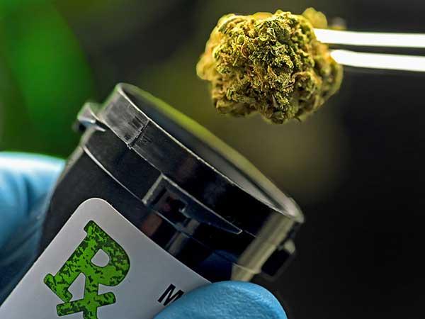 medizinisches-Cannabis-MS