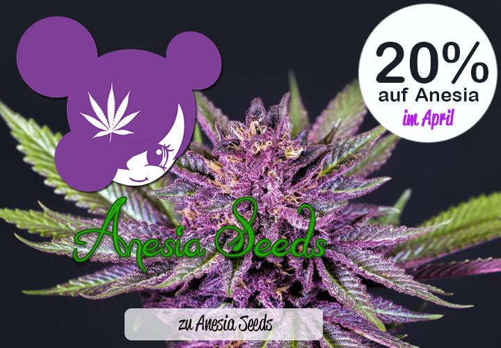 20% auf Anesia Seeds
