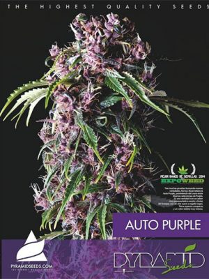 Auto-Purple-Pyramid