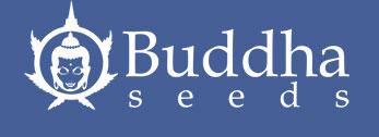 Buddha-Seeds-neu