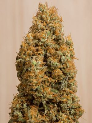 Green Crack CBD von Humboldt Seeds