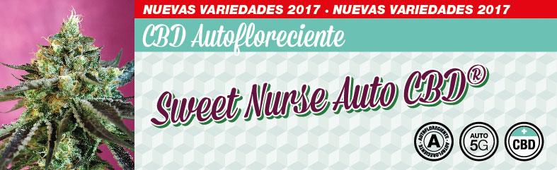 Sweet-Nurse-Auto-CBD