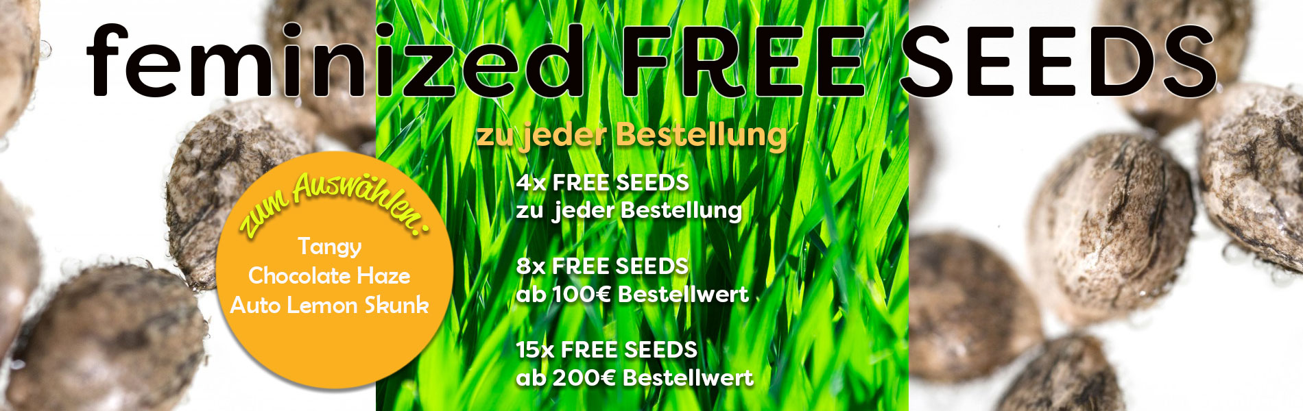 Gratis Cannabissamen im Mai, im Mai gibt es Free Seeds zu jeder Bestellung
