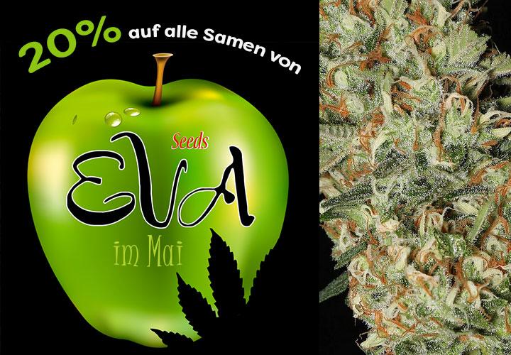 Den ganzen Mai gibt es 20% auf alle Cannabissamen von Eva Seeds