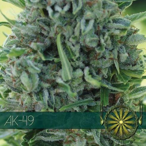 AK-49 von Vision Seeds
