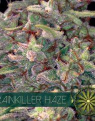 Brainkiller Haze von Vision Seeds