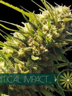 Critical Impact von Vision Seeds