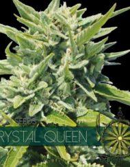Crystal Queen von Vision Seeds