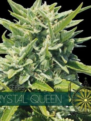 Crystal Queen von Vision Seeds