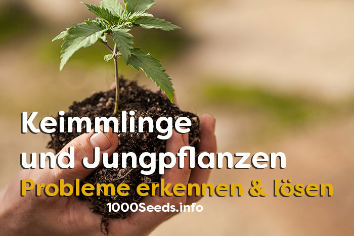 Keimlinge-Seedlinge-Probleme