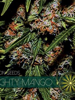 Mighty Mango von Vision Seeds