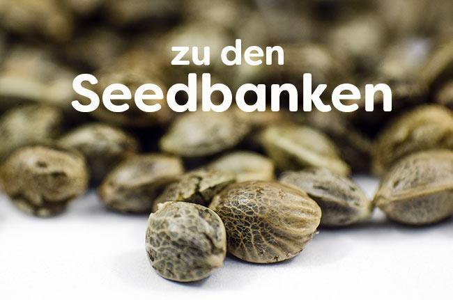 Seedbanken-Cannabis-Seeds