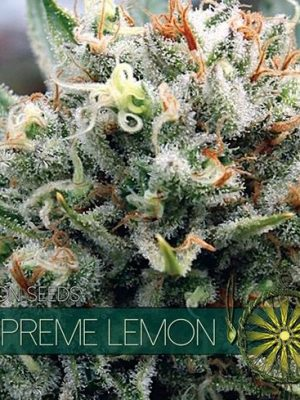 Supreme Lemon von Vision Seeds