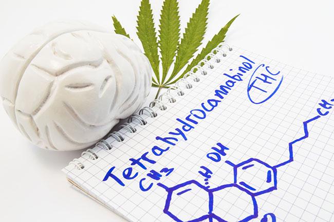 Cannabis Merkfähigkeit