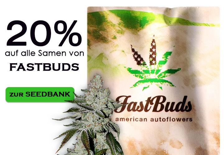 Im September gibt es auf alle Cannabissamen von Fast Buds 20% Rabatt