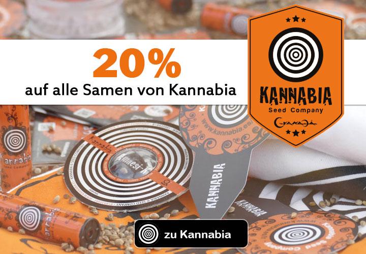 auf alle Cannabissamen von Kannabia git es 20%