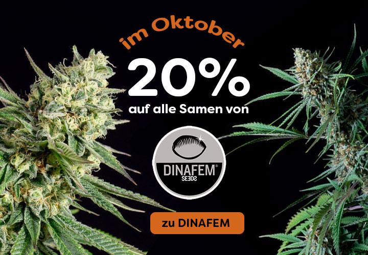 Prozente auf Dinafem, 20% auf alle feminisierten Samen und Automatic Cannabis Seeds