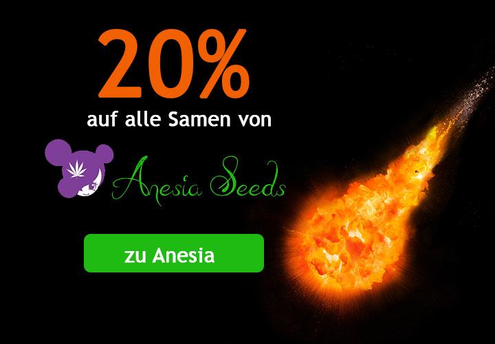 20% auf alle Cannabis Samen von Anesia Seeds, Bruce Banner, Gorilla Glue, Big Bazooka