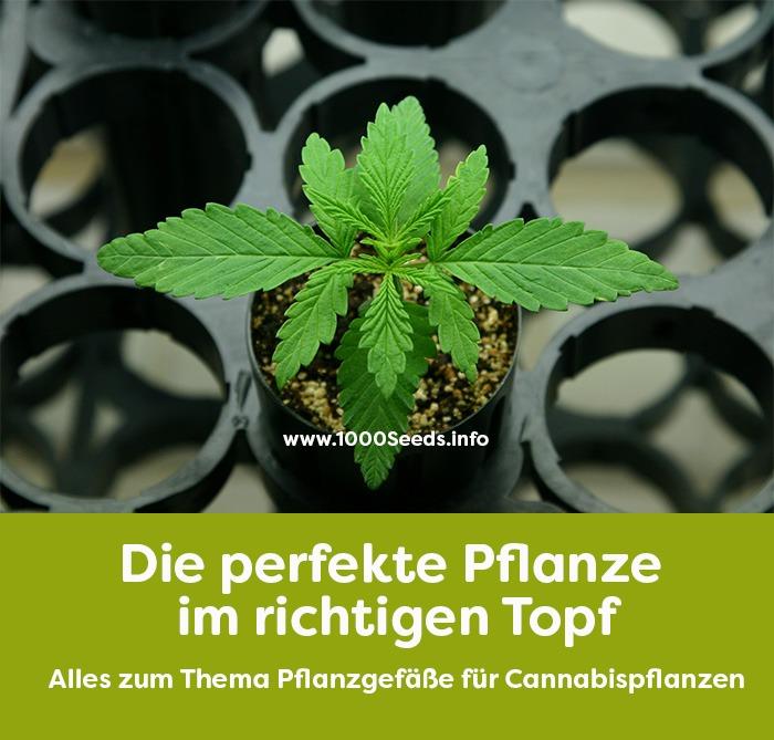 Cannabis-Pflanztopf