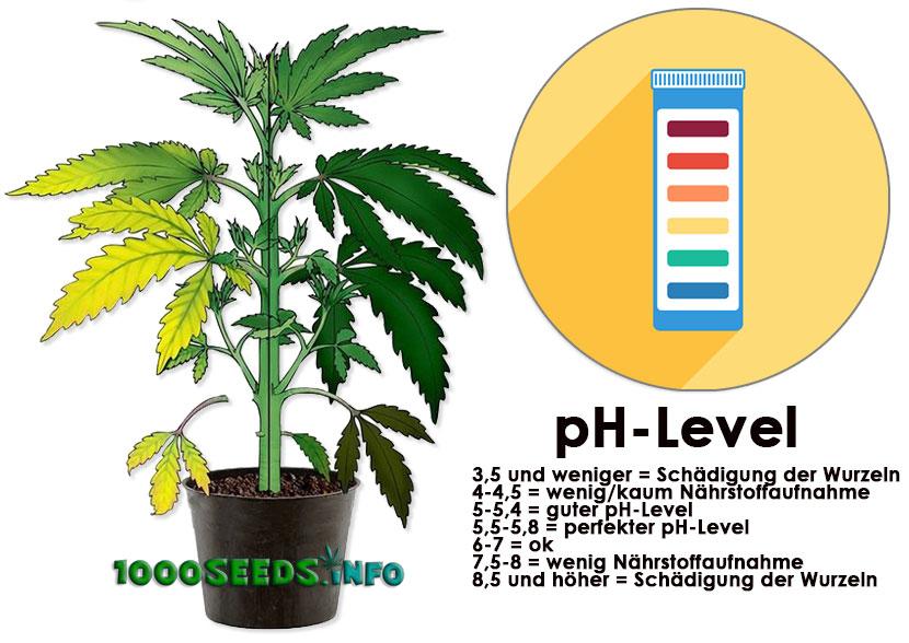ph-Level-Cannabispflanzen