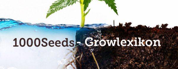 1000Seeds-Growlexikon