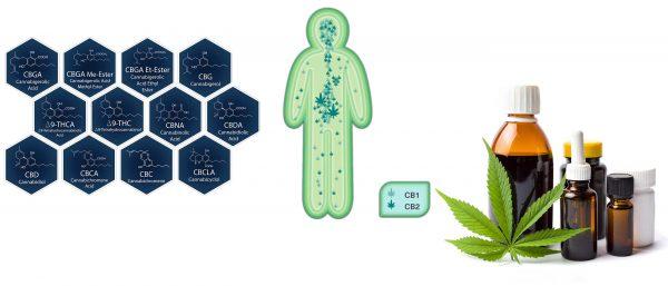Cannabis-als-Medizin
