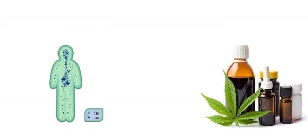 Cannabis-medizinisch