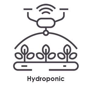 Hydroponic-Cannabis-Anbau