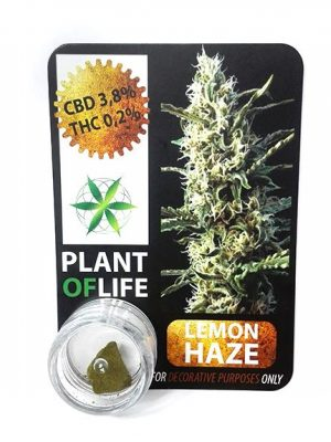 Lemon Haze Polen