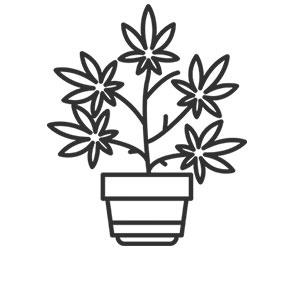 Sorten-Reviews-Cannabis