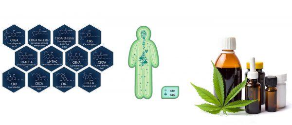 medizinisches-Cannabis-Cannabinoide