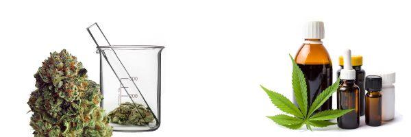 medizinisches-Cannabis-Portal