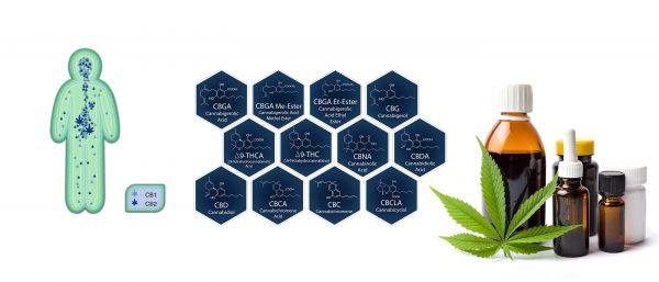 medizinisches Cannabis Studien