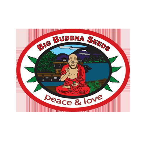 Big-Buddha-Seeds