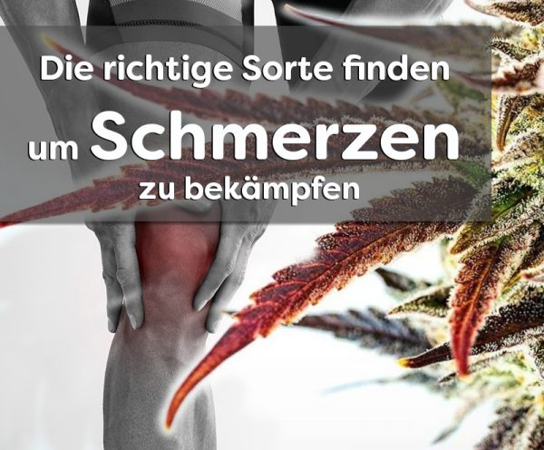 Cannabis-sorten-gegen-Schmerzen