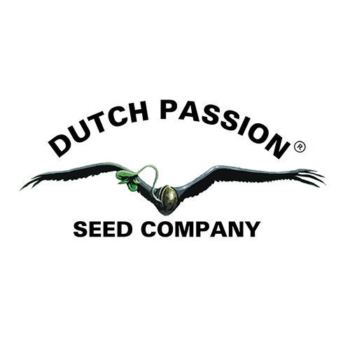 Dutch-Passion-Samen-kaufen