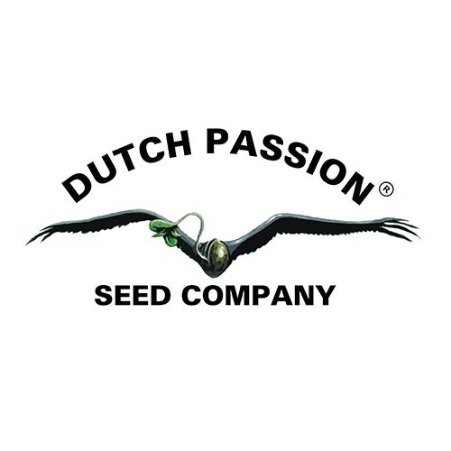 Dutch-Passion-Samen-kaufen