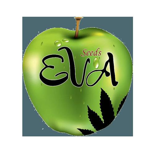 Eva Seeds Cannabis Samen