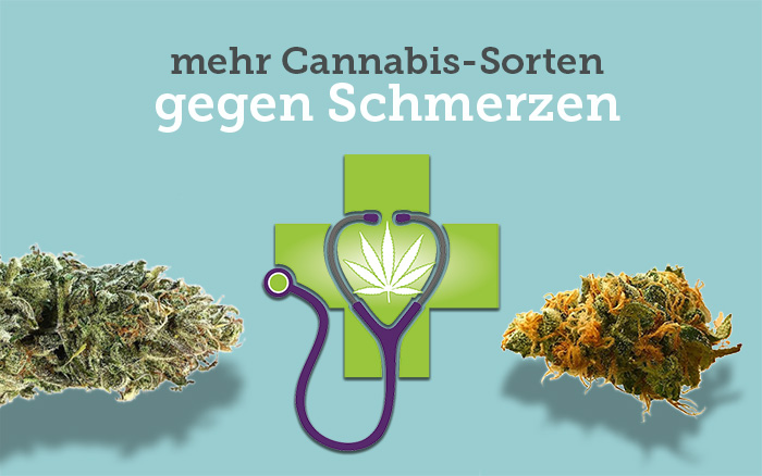 Schmerzen-Cannabis-Sorten