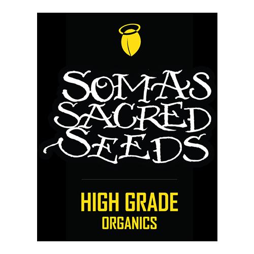 Soma-Seeds-Cannabis-Samen