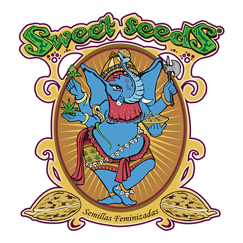 Sweet-Seeds Cannabis Samen