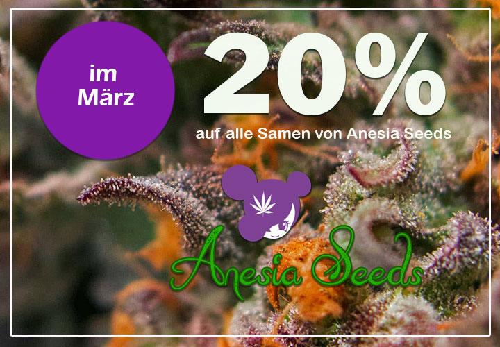 Im März gibt es 20% auf alle Cannabis Samen von Anesia Seeds, Bruce Banner, Gorilla Glue #4, Nova OG, Banana Kush