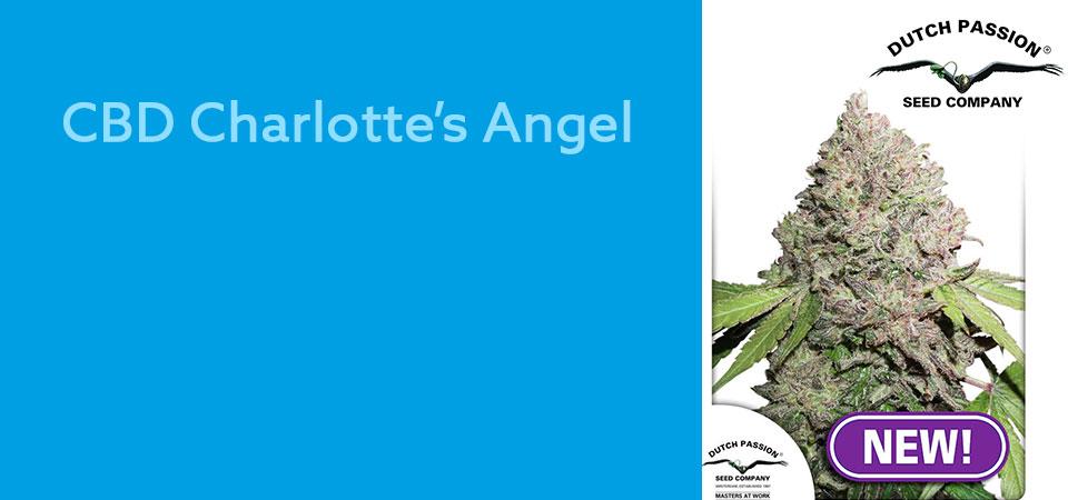 CBD-Charlottes-Angel