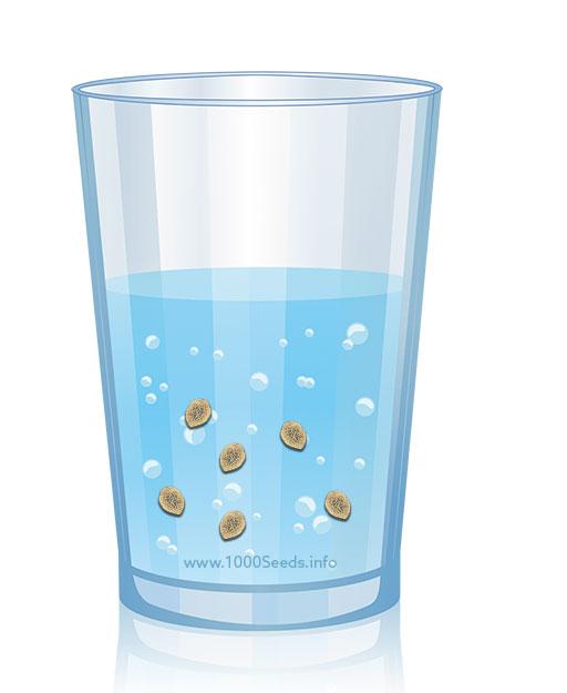 Cannabis-Samen-keimen-Wasser